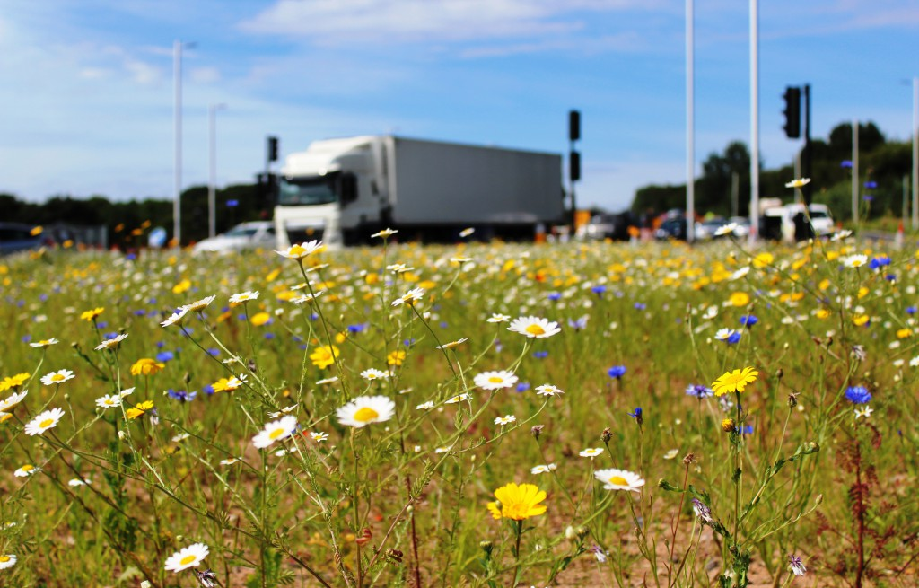 The wildflower meadow at Clifton roundabout is boosting biodiversity