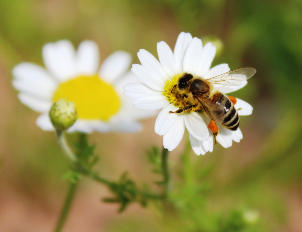 Bees and butterflies thrive on native wildflowers